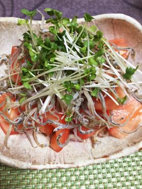 トマトとじゃことスプラウトサラダ